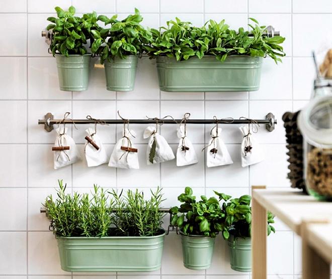 Выращивание зелени на кухне